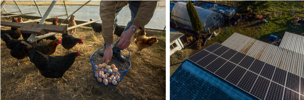 This image has an empty alt attribute; its file name is Clean-Food-Farm-Chickens-and-Solar-Array_Photo-by-DJKmultimedia-1-1024x338.png